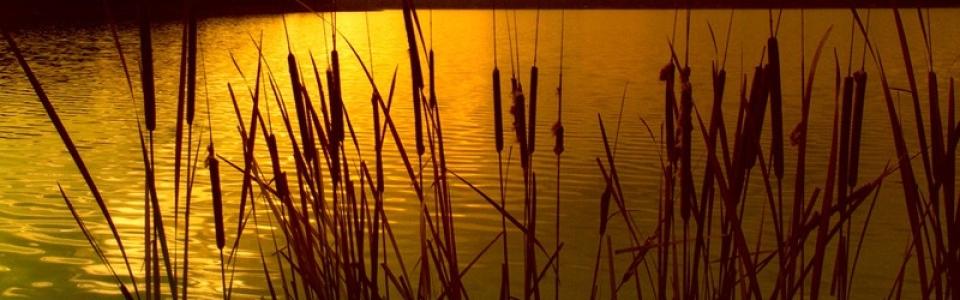 sunset800x600
